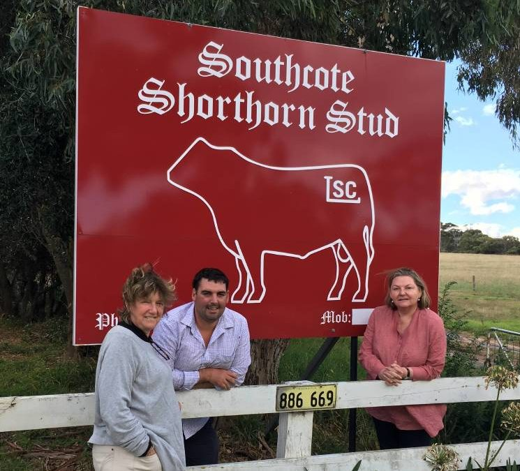 Southcote Shorthorns