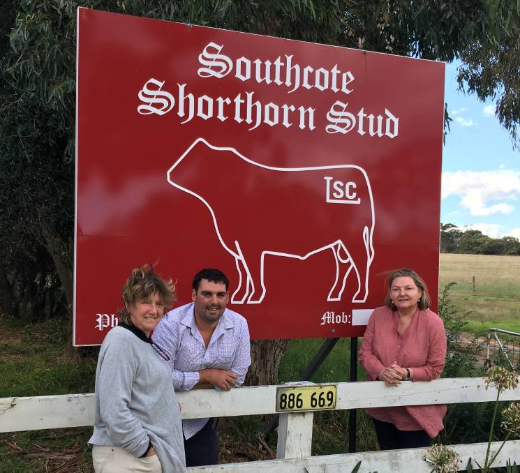 Southcote Shorthorns